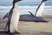 Giant Penguin's Roamed With The Dinosaurs